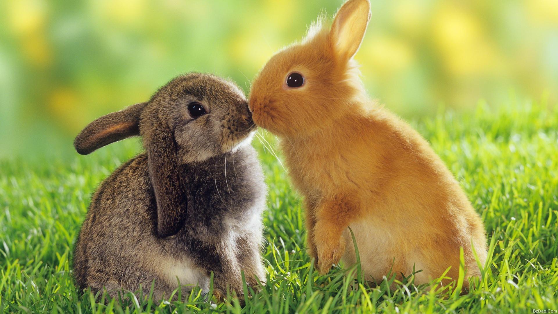 漂亮动物图片大全可爱