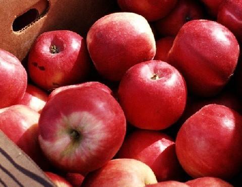 减肥可爱苹果壁纸
