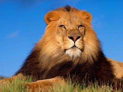 过年狮子手绘图