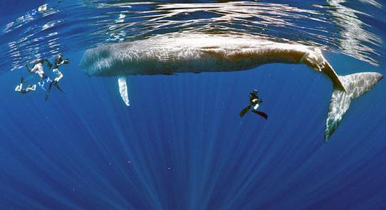 蓝鲸手绘图片上色